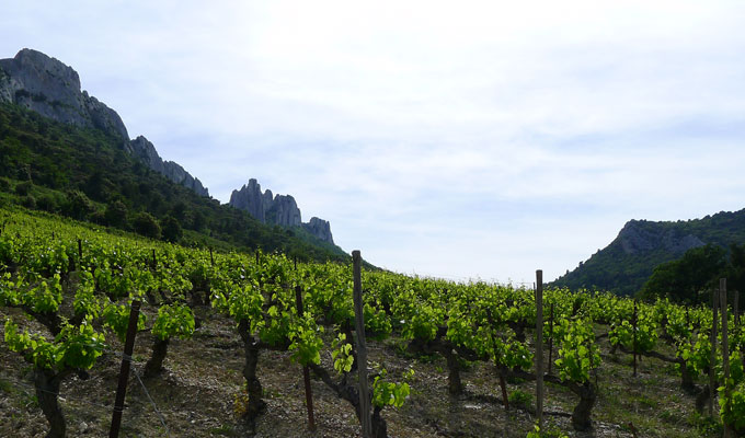 Vignoble Piedmont