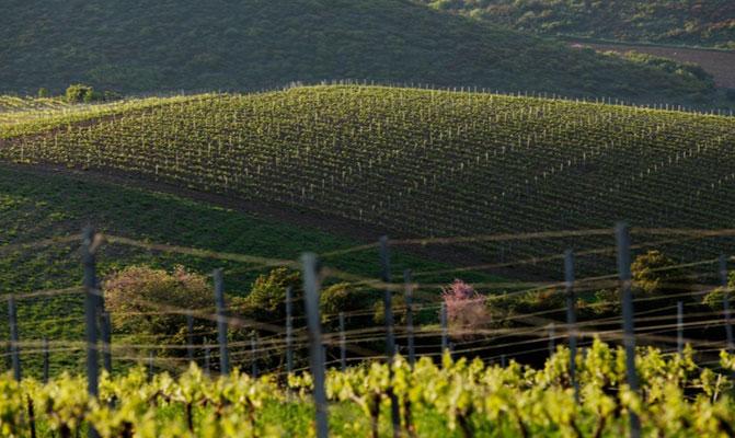 Vignoble Grèce, source winesofgreece.com